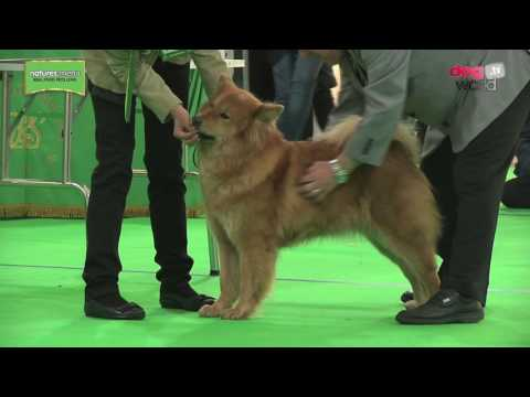 WELKS Championship Dog Show 2017 - Utility group FULL