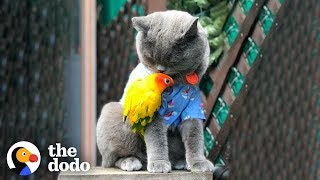 Can A Cat And A Parrot Get Along? | The Dodo Odd Couples