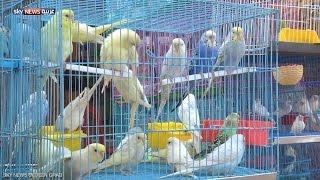 أول معرض لطيور الزينة في الخرطوم
