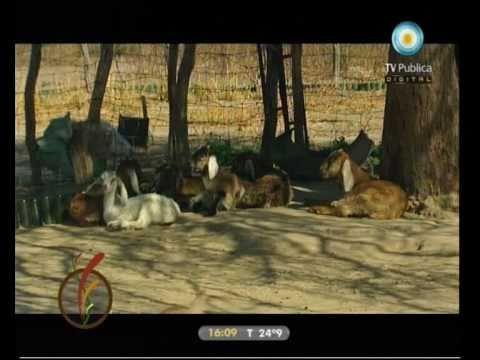 Desde la tierra: Tambo caprino 08-02-11 (2 de 4)