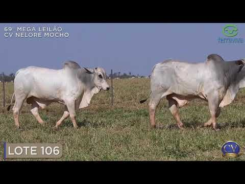 LOTE 106