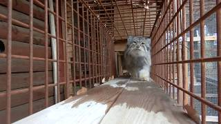 この日は2月22日、日本では「ネコの日」として知られています。 「ネコ...