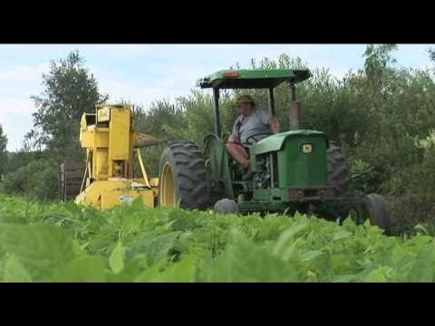 Planting & Harvesting Vegetable Crops Video