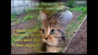 Когда уходит кот - скукотище настает