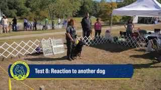 Akc Canine Good Citizen Test8: Reaction To Another Dog