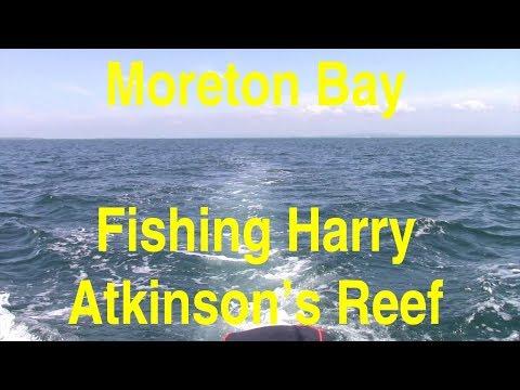 Fishing Harry Atkinsons Reef