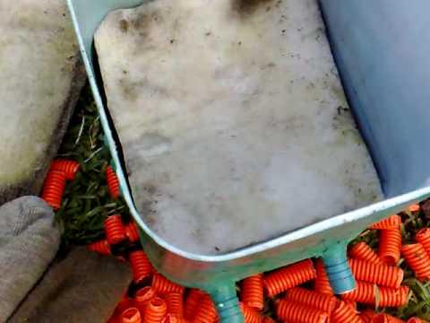 Creaci n de un filtro para tortugas de orejas rojas youtube for Filtro para estanque de tortugas