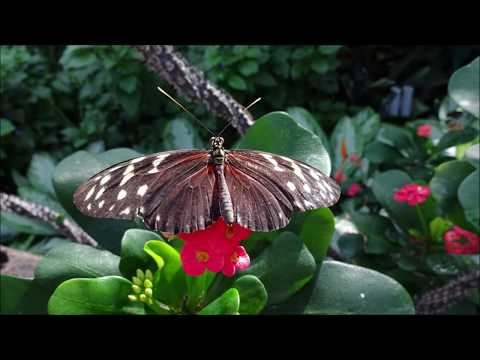 Butterfly Conservatory  - Niagara Parks Botanical Gardens - Canada (photo Video With Music)