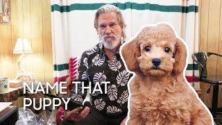 Name That Puppy with Jeff Bridges thumbnail