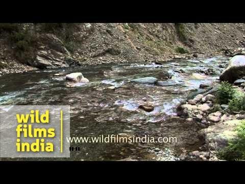 Trout fishing on Jhelum river - Jammu and Kashmir, India