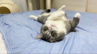 ひんやり布団を敷いたら意地でも動かなくなった猫がこちらです…ww