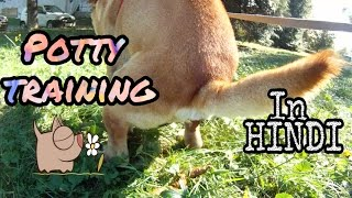 How to potty train your dog or puppy in Hindi | Dog training |