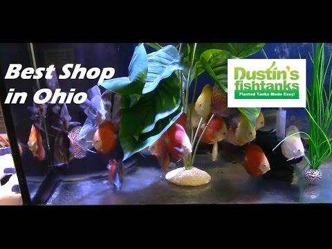 BEST Aquarium Store In Ohio  Freshwater