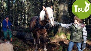 Pferdestärke (Folge 12) | Tiere bis unters Dach | SWR Kindernetz