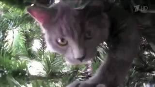 Коты против елок