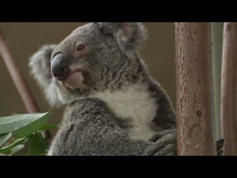 WILD LIFE Sydney Zoo - Fast Track Admission - Video