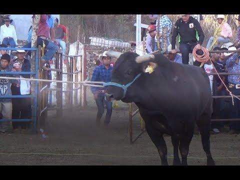 jaripeo-en-napizaro-michoacan-15-de-enero-2018-los-toros-divinos
