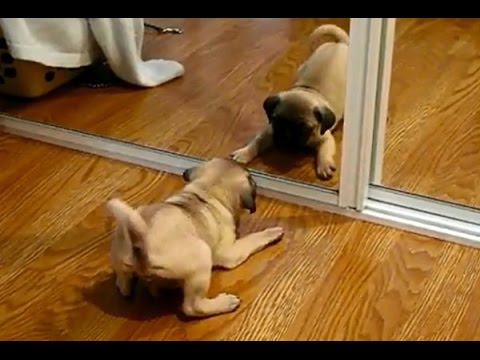 Cute and Funny Dog and Cat Vs Mirror Videos 2017