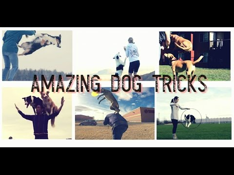DOG TRICKS From All Over The World - Positively Trained