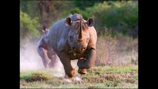 10 самых опасных животных