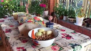 В лес за грибами/ грибной суп / рыбный салат