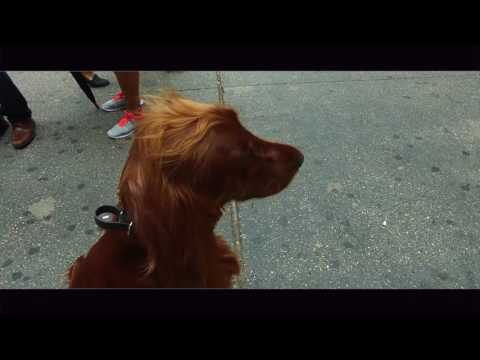 Off Leash at Grand Central Station! What Would Your Dog Do? Nick White