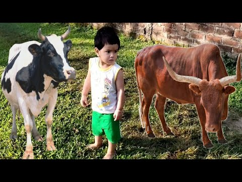Funny Baby & Cow Sounds With Hindi Song || Cow dance | #cow cow sounds effect | cow mooo ||