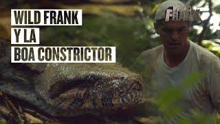 En la jungla Frank se encuentra con una boa constrictor de más de 3...
