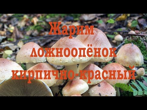 Жарим Ложноопёнок кирпично-красный. Дегустация.