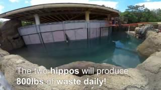 70,000 Gallons Ready for Hippos - Cincinnati Zoo thumbnail