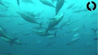 BlueROV2 Dive: Ensenada Fish Farms