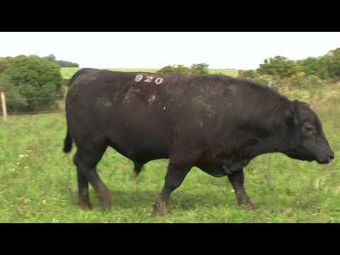 LOTE 12 - ZAMBEZE