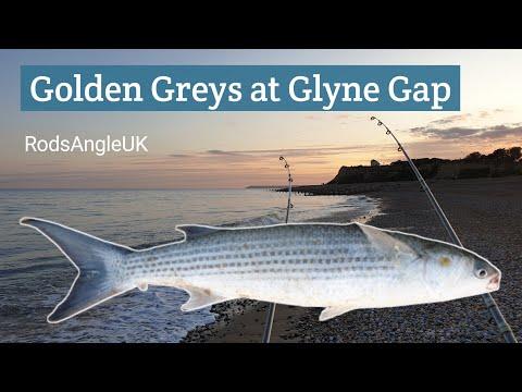 GOLDEN GREYS At GLYNE GAP