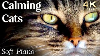 Cats 4K  Calming Cat Video TV Background, Relaxing Piano Music Calming Music for Cats Reduce Stress