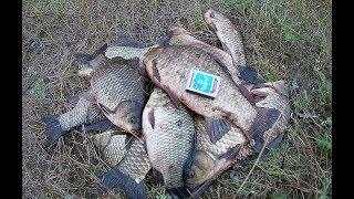 Осенняя  рыбалка на удочку. ДЕВЧАТА НА РЫБАЛКЕ