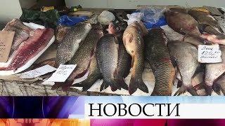 В Волгоградской области развернулась настоящая спецоперация по сохранению речной рыбы.