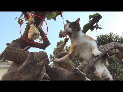 Cats vs The Tree of Drumsticks