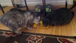 #13 Мои кошки Кошачья еда