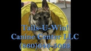Tails-u-win! Canine Center Llc Manchester Connecticut