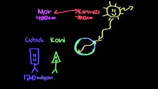 Görsel Algı Bilgisi (Sinir Sistemi Fizyolojisi) (Psikoloji / Çevreyi Algılama)