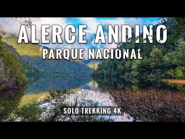 Parque Nacional Alerce Andino en 4K: Trekking 11 kms en Puerto Montt, Chile