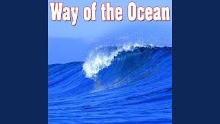 Meditative Ocean Waves and Seagulls