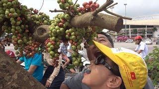 Chủ cây sung này quá sướng, ai đi qua cũng muốn há miệng chờ sung. 200 triệu cây này - super  bonsai