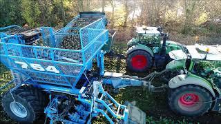 Edenhall 754 / Suikerbieten rooien 2018 / Beet Harvest / Zuckerrüben ernten  / Fendt