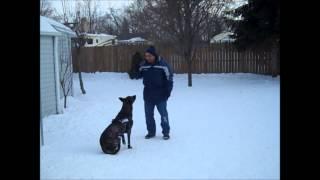 Canine Man's Dog Malo Max
