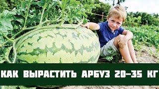 Выращивание арбузов(Выращиваем арбуз, от высадки рассады, до получения спелой ягоды., 2015-07-25T07:54:23.000Z)