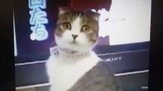 Видео приколы про животных 2015 . Video jokes about animals 2015