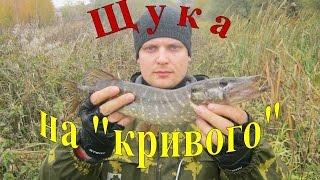 Щука на кривого. Ловля щуки на воблер / Pike-fishing with bent wobbler. 05.10.2014