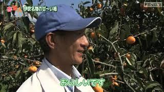 KBS京都テレビ「夢追人」滋賀編(2018年11月放送)伊吹の平たねなし柿・稲富菜穂リポーター