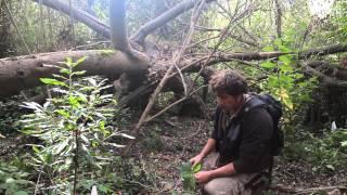 Lobos Creek - Riparian Forest